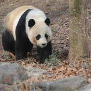 Panda Seo Software